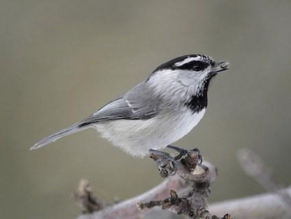 tiny bird garden guide