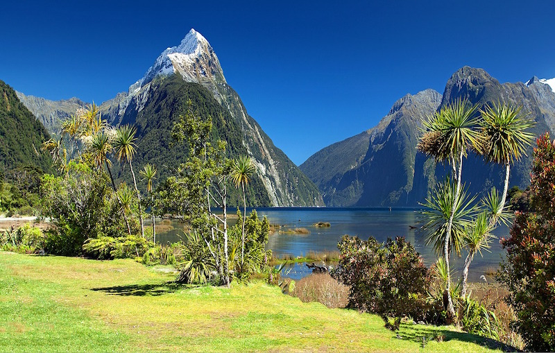 new zealand application for tourist visa