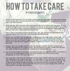 succulent care instructions card
