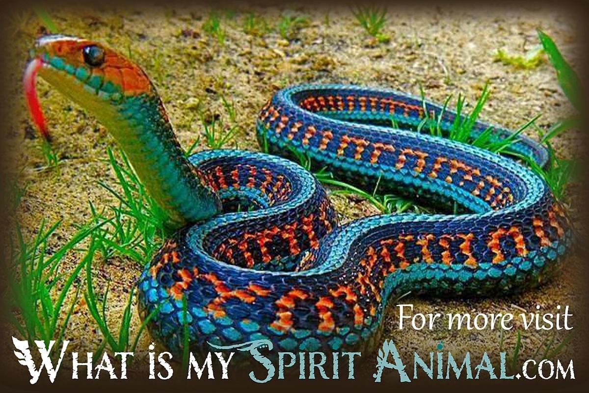 tom chetwynd dictionary of symbolic and mythological animals