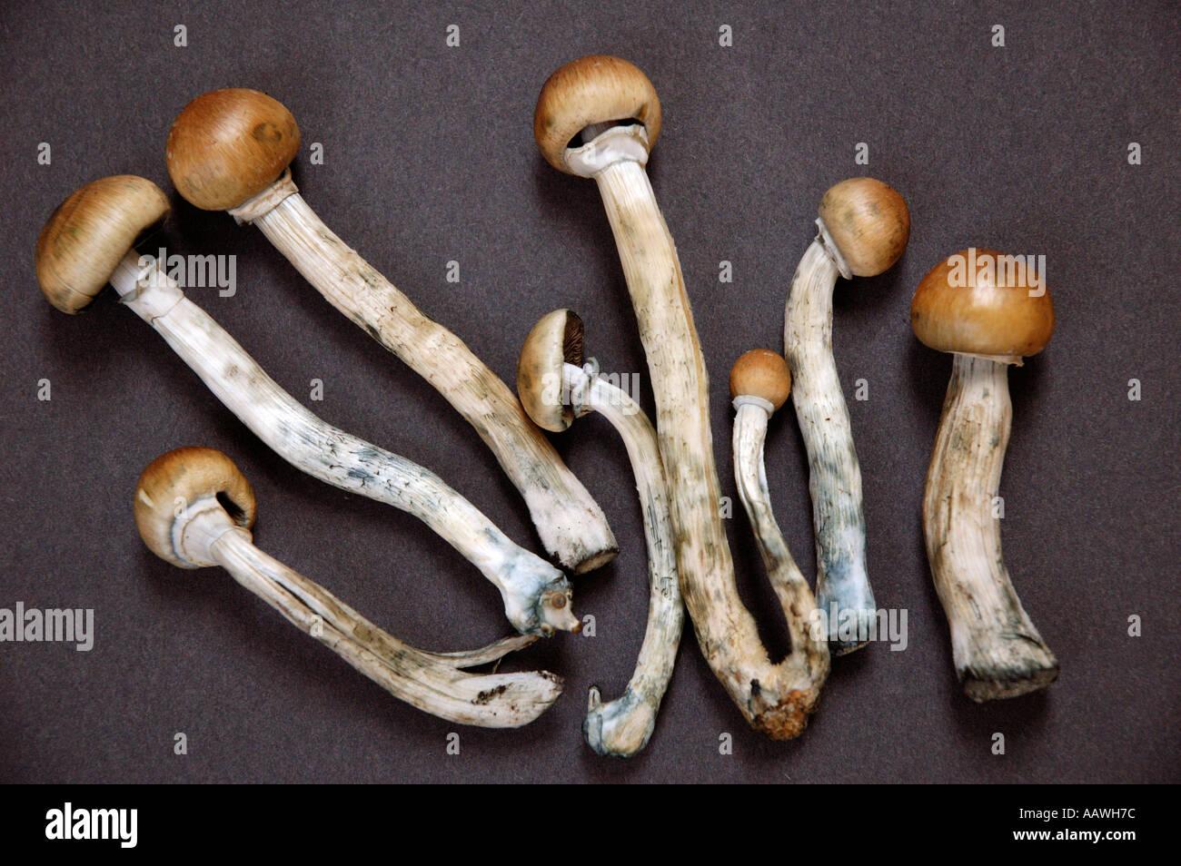 nz magic mushrooms guide
