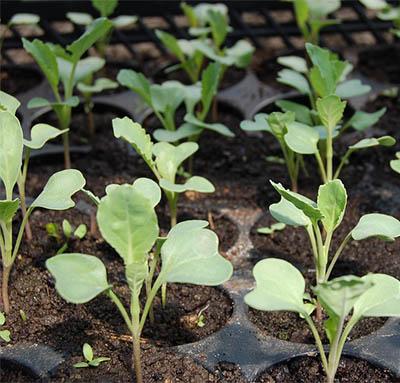 nz greenhouse growing guide