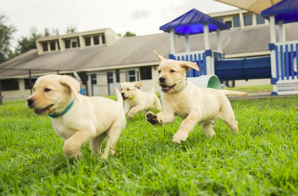 where can guide dogs go