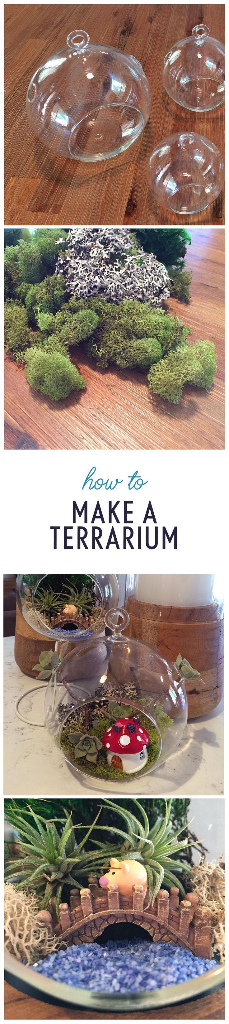 terrarium guide