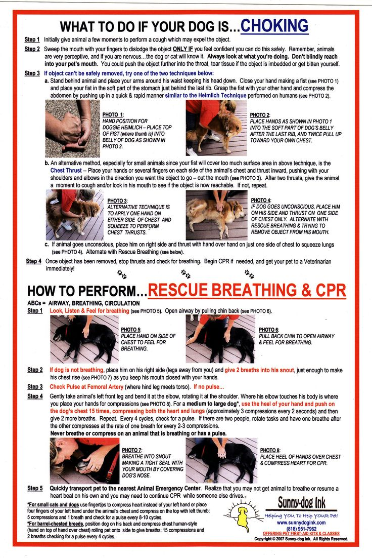 printable pet first aid guide