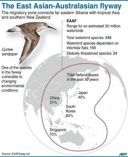 migration in birds pdf