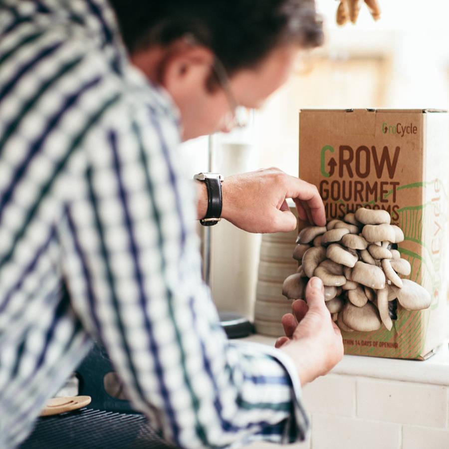 mushroom gourmet growing kit instruction nz