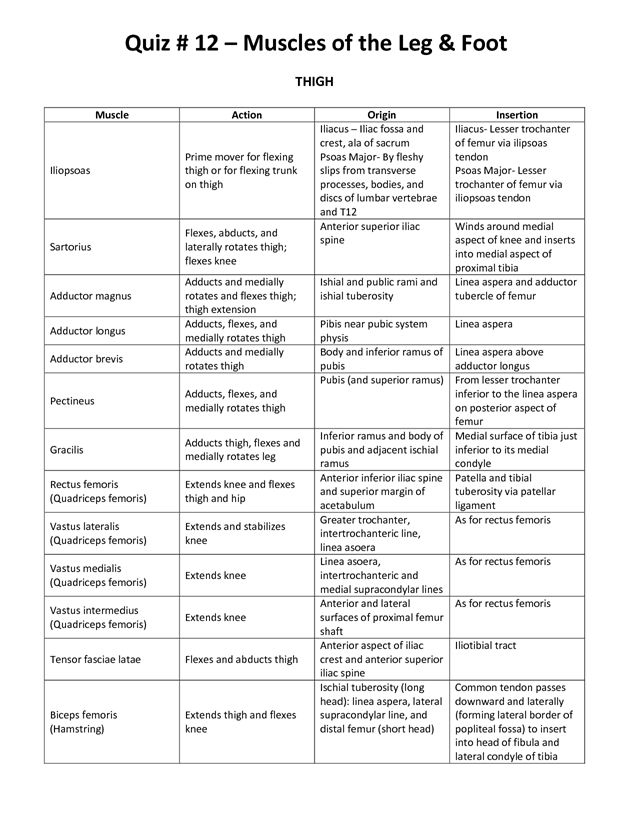 muscle origin and insertion chart pdf