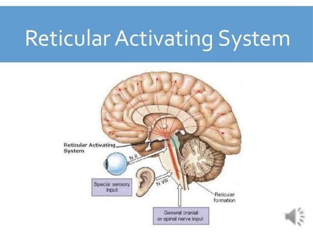 reticular activating system pdf