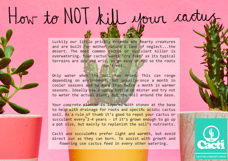 succulent care instructions card