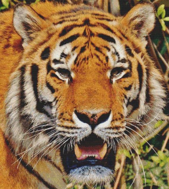 tiger pdf