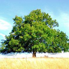 tree crops pdf